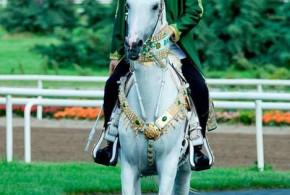 تاریخچه اسب ترکمن (۶)