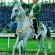 هنر اسب شناسی ترکمنها،  TurkmenT At