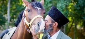 ترکمن و عشق به اسب