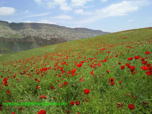 جاده دهستان هزار مسجد ( لایین نو ) 2