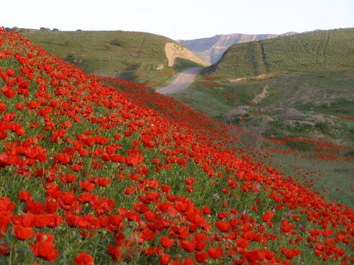 مسیر روستای چهچهه کلات 1