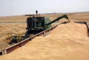 خریدافزون بریک میلیون و ۲۰۰ هزارتن گندم درگلستان/ پرداخت بهای ۶۰درصد
